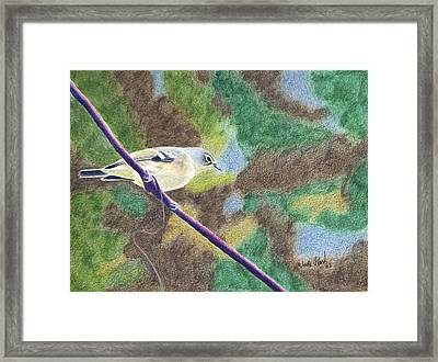 Solitary Vireo Framed Print by Wade Clark
