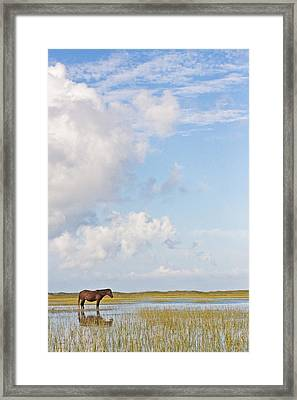 Framed Print featuring the photograph Solitary Wild Horse by Bob Decker