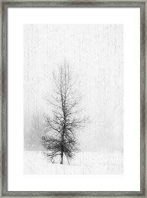 Framed Print featuring the photograph Solitude  by Alana Ranney