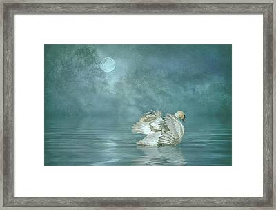 Solitude Framed Print by Brian Tarr
