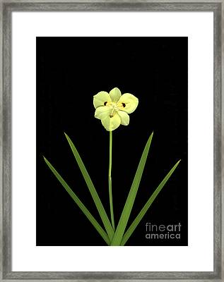 Solitude Framed Print by Christian Slanec