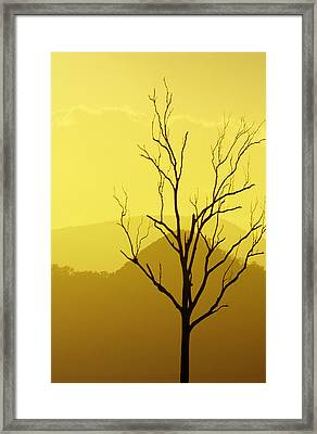 Solitude Framed Print by Holly Kempe
