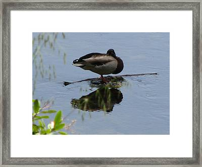 Solitude II Framed Print by Kathy Roncarati