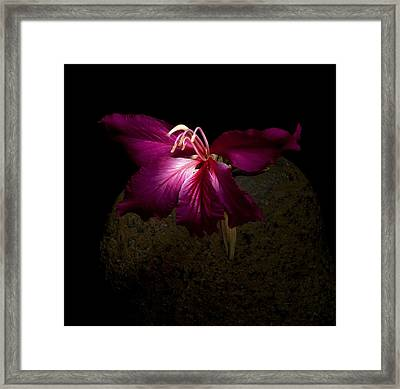 Solitude II Framed Print