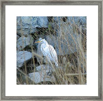Solitude Framed Print by Kathy Roncarati