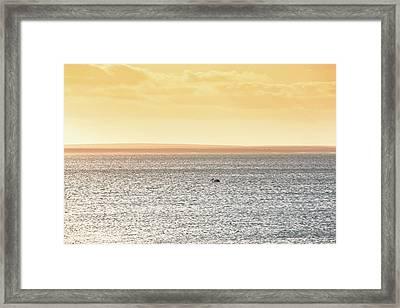 Solitude Monkey Mia, Shark Bay Framed Print by Dave Catley
