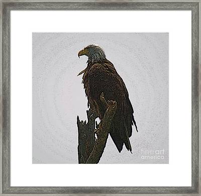 Solitude Framed Print by Robert Pearson