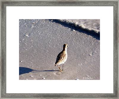 Solo Bird Framed Print by Elizabeth Klecker