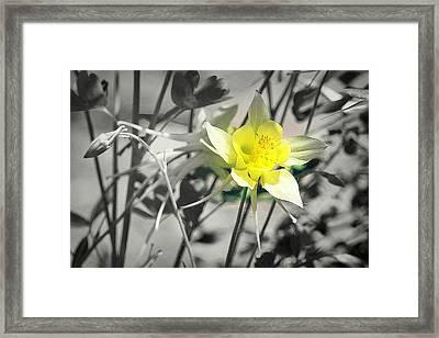 Solo  Framed Print by Clarice Lakota