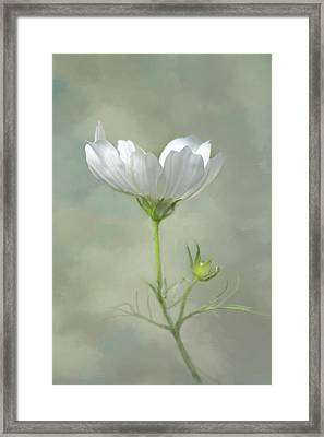 Framed Print featuring the photograph Solo Cosmo by Ann Bridges