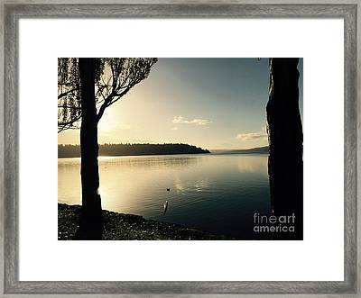 Solo Duck In The Sun Framed Print