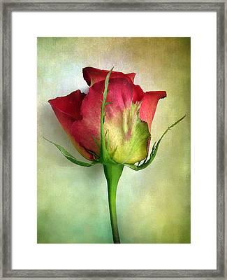 Solo Framed Print by Jessica Jenney