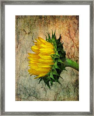 Framed Print featuring the photograph Solo by John Rivera