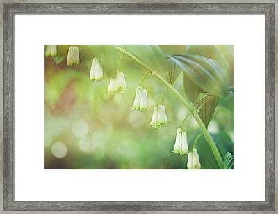 Solomons Seal Framed Print by Margaret Goodwin