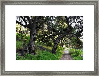 Solstice Canyon Live Oak Trail Framed Print by Kyle Hanson