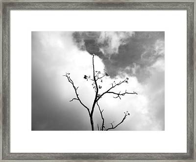 Solstice Dance #3 Framed Print by Kathleen Grace
