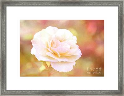 Solstice Rose Framed Print