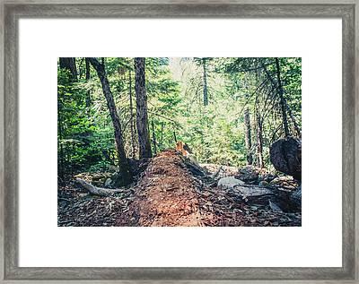 Somber Walk- Framed Print