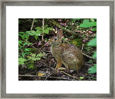 Framed Print featuring the photograph Some Bunny Stopped By by Bill Pevlor