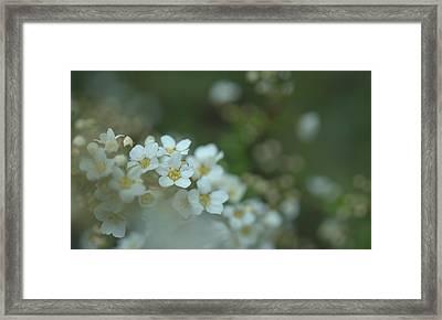 Some Gentle Feelings Framed Print