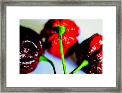Some Like It Hot Framed Print by Nicole Frischlich