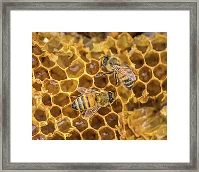 Framed Print featuring the photograph Some Of Your Beeswax by Bill Pevlor
