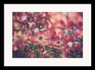 Dogwood Blossom Photographs Framed Prints