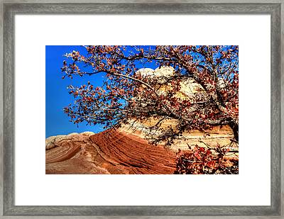 Some Tree In The Desert Framed Print by David Andersen