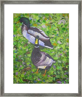 Somerset Ducks Framed Print