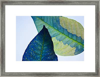 Something Blue Framed Print by Bobby Villapando
