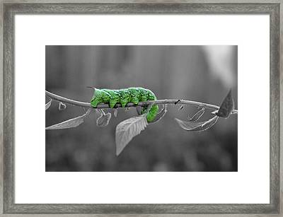 Something Green Framed Print by Teresa Blanton
