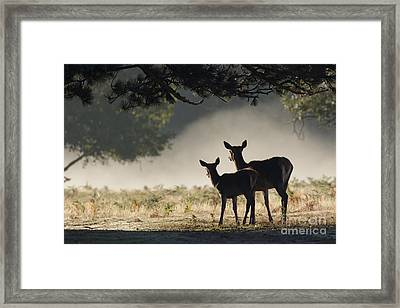 Something In The Mist Framed Print