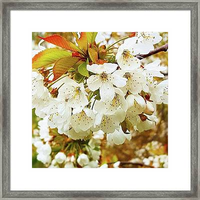 Something Magical About Spring Framed Print by Dante Harker