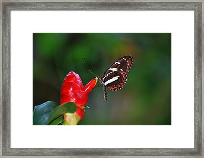 Framed Print featuring the photograph Something Red by Teresa Blanton