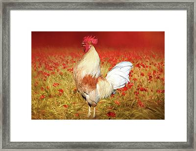 Something To Crow About Framed Print by Donna Kennedy