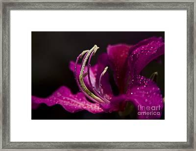 Something Wonderful Framed Print by Sharon Mau
