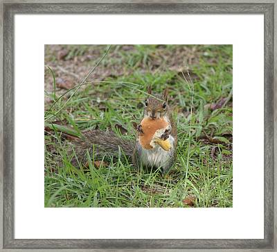 Sometimes I Feel Like A Nut Framed Print by Debbie May