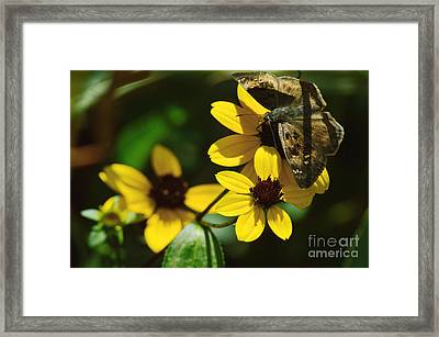Sometimes Moments Whisper Framed Print by Robyn King