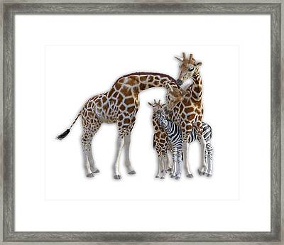 Sometimes You Have To Find The Right Spot To Fit In Framed Print by Betsy Knapp