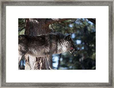 Sometimes You Have To Kill Framed Print