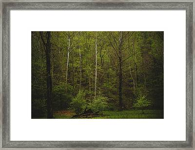 Framed Print featuring the photograph Somewhere In The Woods by Shane Holsclaw