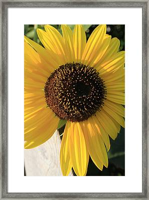 Son Of A Sun Framed Print by Alan Rutherford