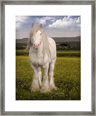 Son Of Lloyd Framed Print by Elizabeth Sescilla