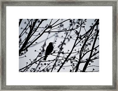 Framed Print featuring the photograph Song Bird Silhouette by Terry DeLuco