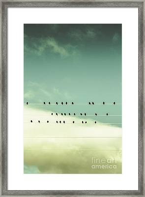 Song Birds On Five Lined Staff Framed Print by Jorgo Photography - Wall Art Gallery