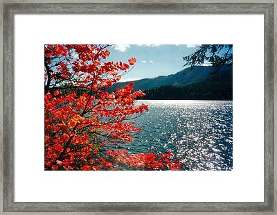 Song Of The Fall. Framed Print by Anastasia Michaels