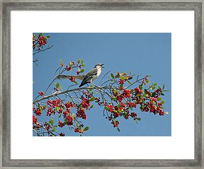 Framed Print featuring the photograph Song Of The Mockingbird by Peg Urban