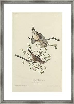 Song Sparrow Framed Print