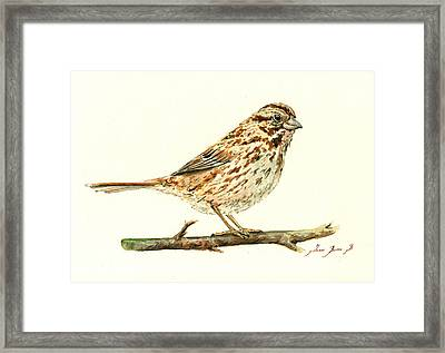 Song Sparrow Framed Print