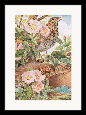 Plant Singing Drawings Framed Prints